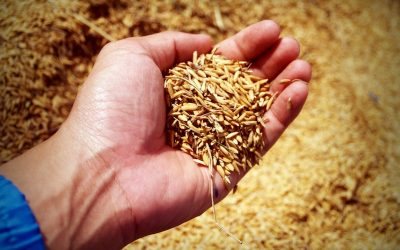 What Are The Alternative Gluten Free Flours And Grains